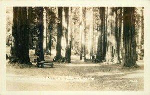 Humboldt California Lanes Redwood Flat 1930s RPPC Photo Postcard 20-9857