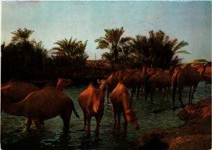 PC CPA BAHRAIN, BAHRAIN, DRINKING TIME FOR CAMELS, Modern Postcard (B3767)