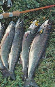Canada Nice Catch Of Trout Greetings From Newfoundland