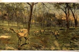 1912 Deer In Riverview Park - Omaha Nebraska NE Postcard y4713