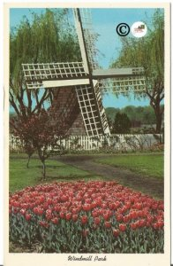 Windmill Park Holland Michigan Tulips Vintage Postard