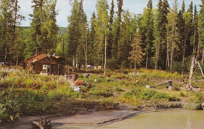 Alaska Homesteader's Cabin On Tanana River Near Fairbanks
