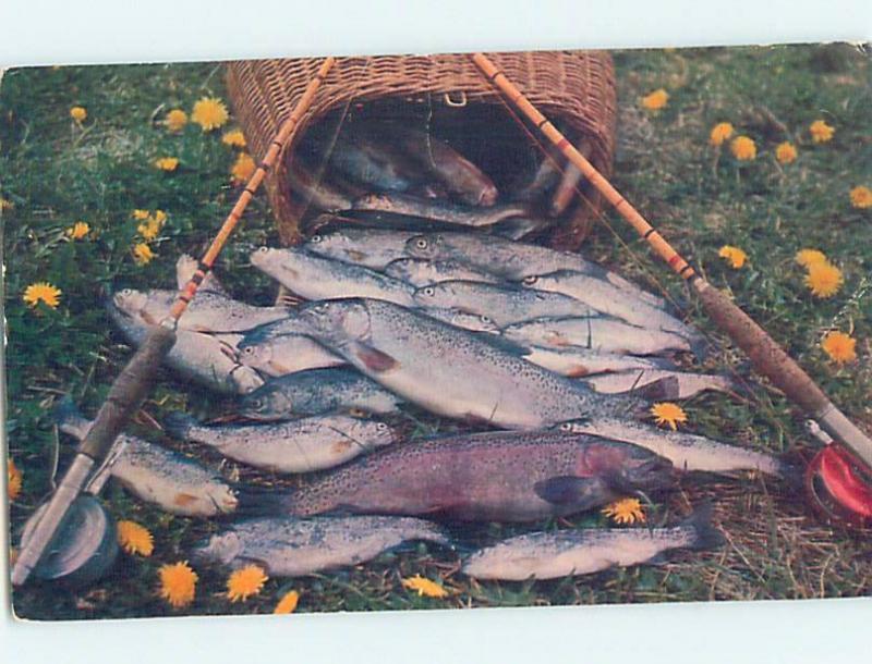 1960's FISH CAUGHT AT POLARIS HOTEL Happy Valley Goose Bay Labrador NL F6438