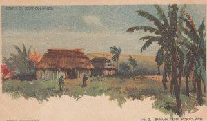 Banana Farm , PORTO RICO , 1903