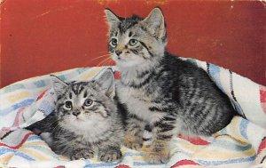 Cat Post Card, Cats Postcards Kittens Unused