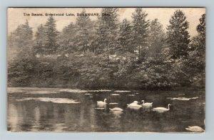 Delaware OH, Greenwood Lake, Swans, Vintage Ohio c1909 Postcard