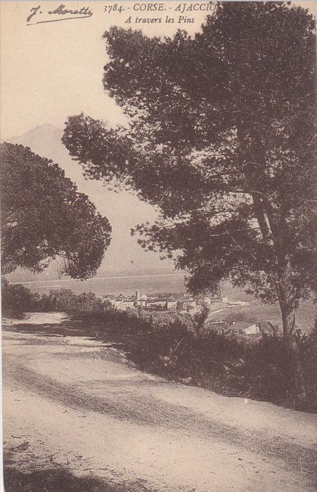 CORSE.-AJACCIO , A Travers les pins , France , 00-10s