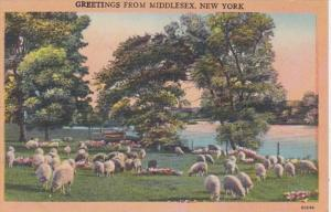 New York Greetings From Middlesex