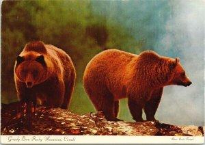 Grizzly Bear Banff National Park AB Alberta Bears Unused Vintage Postcard C3