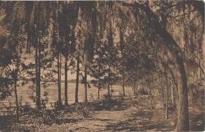 WEST PALM BEACH FL - Tropical walkway + REAL ESTATE ADVERTISEMENT 1910s / PRICE
