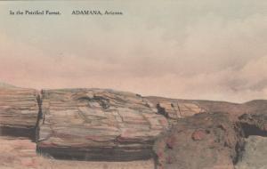 ADAMANA, Arizona, 1920-30s; In the Petrified Forest # 4