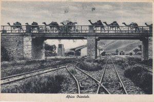 Camel Train on bridge over Railroad Tracks , Africa Orientale , 00-10s