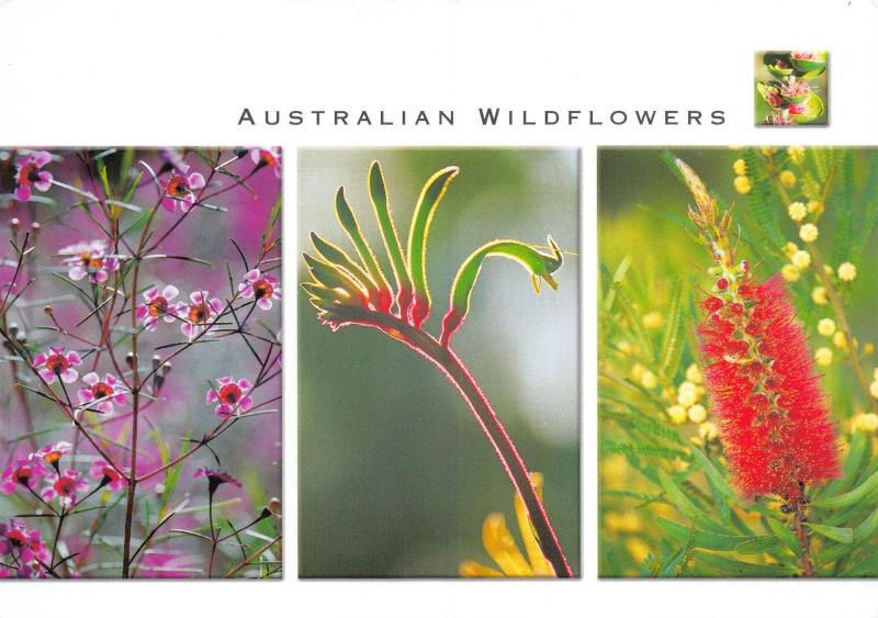 Postcard Australian Wildflowers Multiview #314