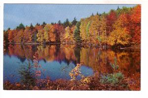Autumn Leaves Reflected in a Lake, Morehead City, North Carolina,