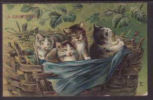 A Grand View,Basket of Kittens Postcard