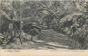 West Bengal tropical montane foresta Nilgiri Shola