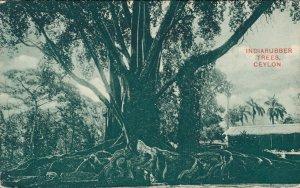 Sri Lanka India Rubber Trees Ceylon 06.38