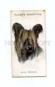 166938 SKYE TERRIER WARDLE Player CIGARETTE card ADVERTISING