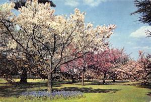 England Surrey Richmond Royal Botanic Gardens Kew, Spring
