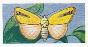 Swettenhams Tea Vintage Trade Card Butterflies & Moths 1958 No 15 Xanthodes G...