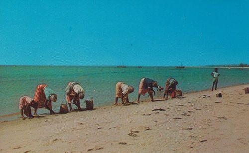 Native Fishing Women Catching Fish Cockles Mozambique Laurenco Marques Postcard