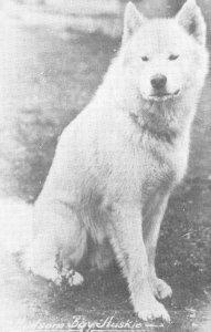Hudson's Bay Huskie Dog, Carcross, Y.T. Husky c1950s Vintage  Postcard