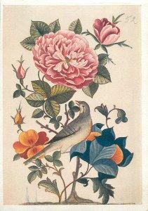 Iran miniature nightingale and a rose Postcard