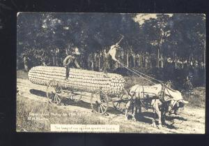 RPPC MARTIN EXAGGERATION CORN FARMING IOWA REAL PHOTO POSTCARD LINN GROVE