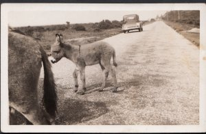 Animals Postcard - The New Forest Wildlife - Donkey Crossing The Road DC81