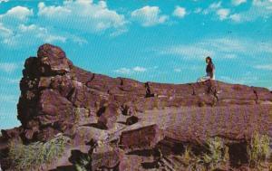 Arizona Old Faithful Log Petrified Forest National Monument 1958
