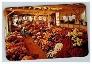 North East PA, Paschke Mume Farm c1960 Postcard I11