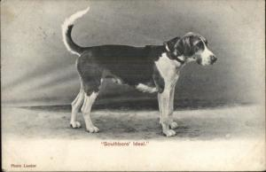 Hound Dog 'Southboro Ideal' c1910 Postcard