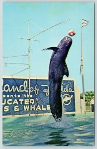 Marineland Florida~Educated or Genuis Whale Leaps to Strike Beach Ball~1950s