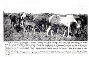 Virginia Chincoteague , Pony-Penning Day