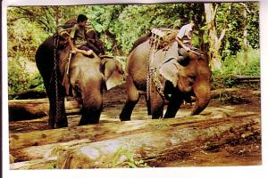 Trained Elephants, Boys Working Them in Teak Forests Chiengmai, North Thailand
