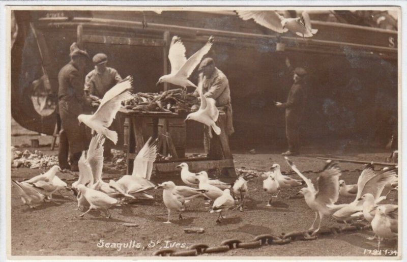RP: ST. IVES , England , 1910-30s ; Seagulls & Fishermen