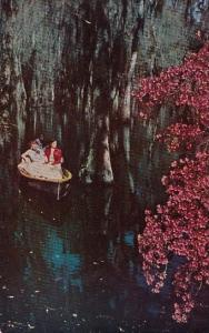 Cypress Gardens Charleston South Carolina