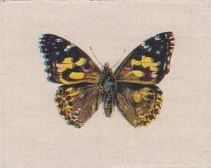 R J Lea Vintage Silk Cigarette Card Butterflies & Moths 1924 Painted Lady