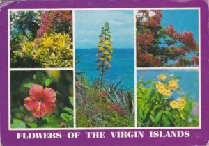 Flowers Of The Virgin Islands