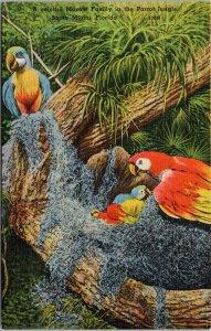 Macaws Parrot Jungle South Miami  FL Florida Unused Linen Postcard F25