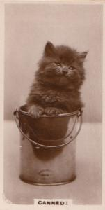 Cat Stuck In Bucket Damned German Old Real Photo Cats Cigarette Card