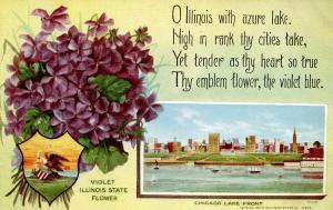 Illinois State Flower - Violet