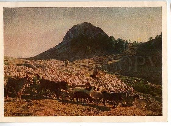 130960 Republic of ALBANIA herd in mountains old postcard