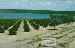 Governors' Grove, CLERMONT, Florida, 40-60´