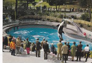 Killer Whale , VANCOUVER , B.C. , Canada , 50-70s