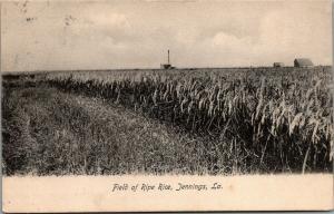 Jennings Louisiana~Field of Ripe Rice~Farming~Storage Barns 1907 Postcard