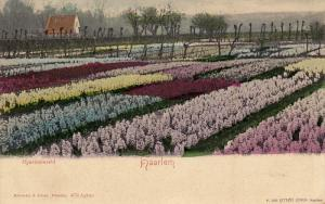Hyacintenveld, HAARLEM, North Holland, Netherlands, 00-10s