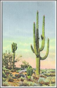 Arizona Giant Saguaro Cactus Postcard