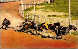 On the Turn Kennel Club Dog Track Miami Beach Florida PM - linen -  Postcard