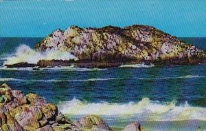 California Monterey Peninsula Seal And Bird Rocks